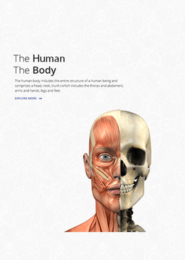 The Human The Body
